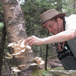 Finding Aspen Oysters