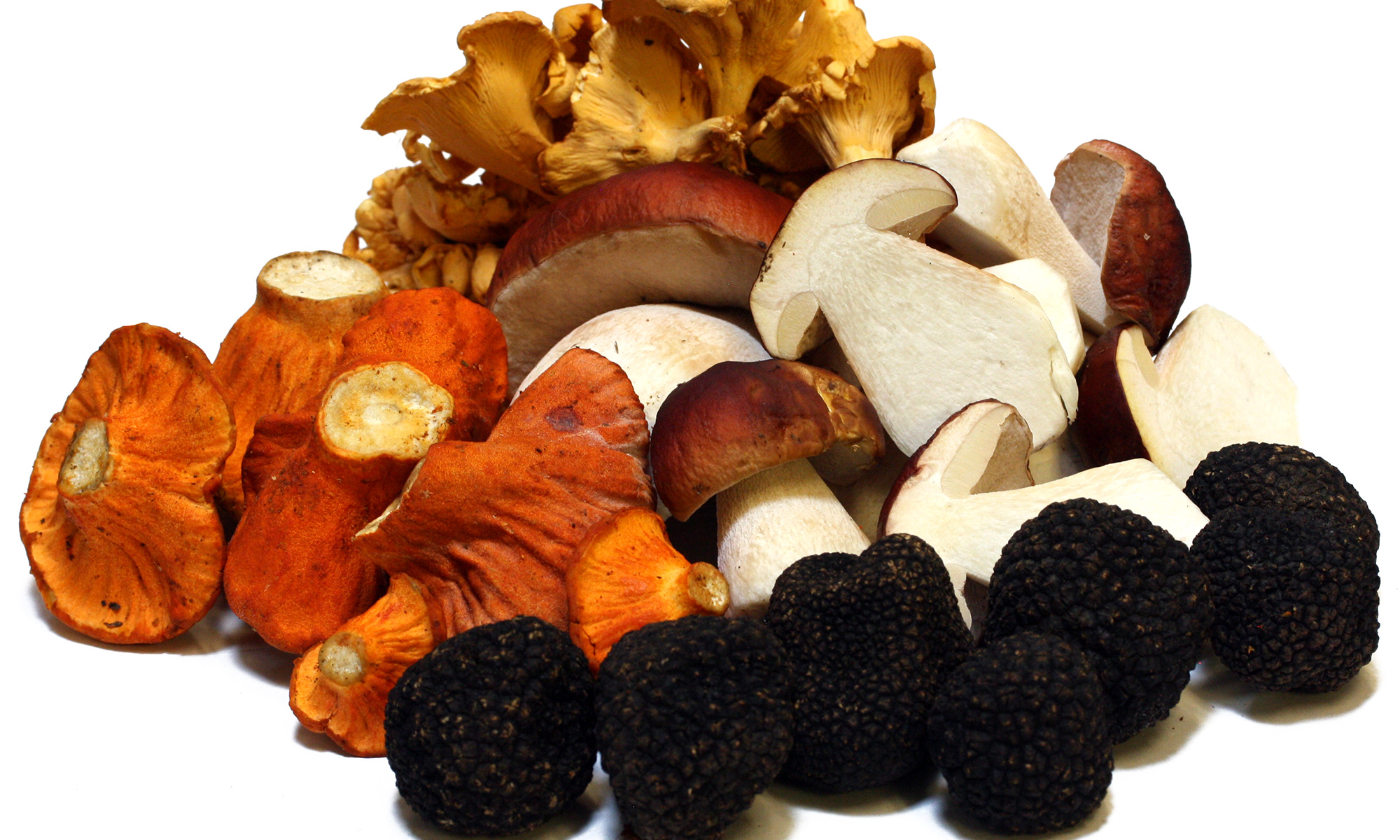 main-page-wild-mushrooms